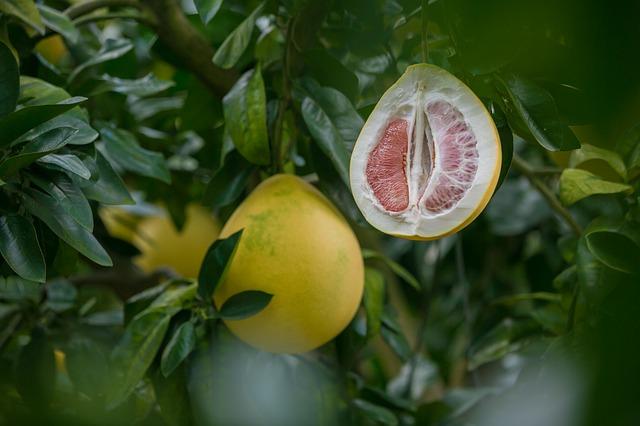 pomelo owoc zdrowie